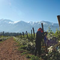Vineyard & winery in Chile