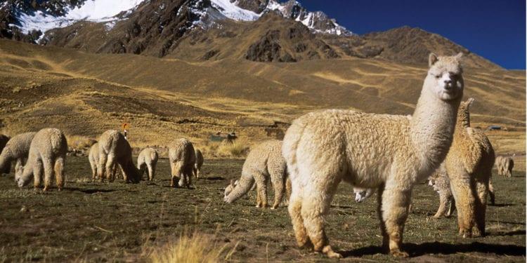Belmond Andean Explorer Arequipa to Cusco